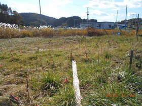 陸前高田ひろば20191102033.jpg