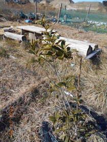 陸前高田ひろば20200125013.jpg