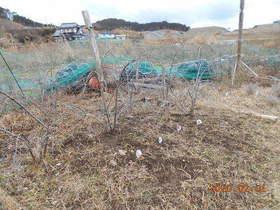 陸前高田ひろば20200201035.jpg