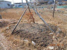 陸前高田ひろば20200215030.jpg