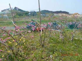陸前高田ひろば20200502005.jpg