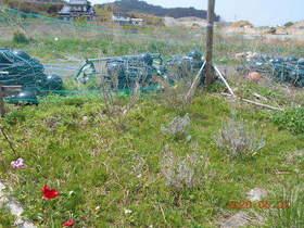 陸前高田ひろば20200502007.jpg