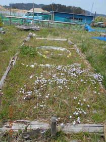 陸前高田ひろば20200502049.jpg