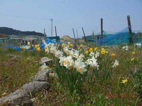 陸前高田ひろば20200502056.jpg