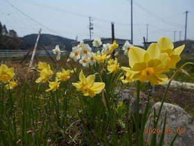 陸前高田ひろば20200502057.jpg