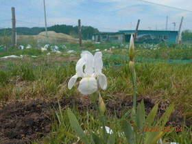 陸前高田ひろば20200504018.jpg