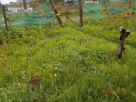 陸前高田ひろば20200523010.jpg