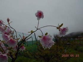 陸前高田ひろば20200523022.jpg