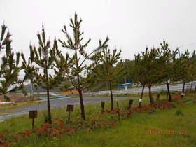 陸前高田ひろば20200523049.jpg