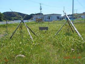 陸前高田ひろば20200530048.jpg