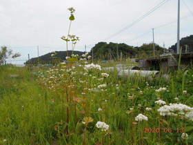 陸前高田ひろば20200613025.jpg