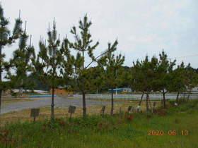 陸前高田ひろば20200613054.jpg