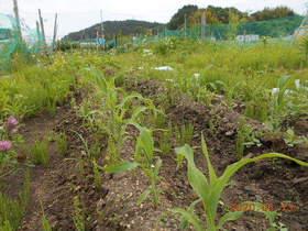 陸前高田ひろば20200613061.jpg