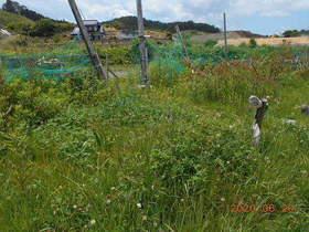陸前高田ひろば20200620005.jpg