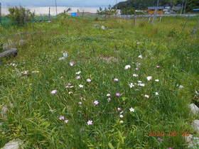 陸前高田ひろば20200620010.jpg