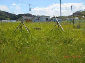 陸前高田ひろば20200620045.jpg