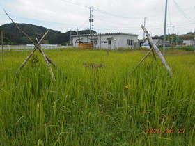 陸前高田ひろば20200627050.jpg