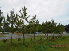 陸前高田ひろば20200627052.jpg