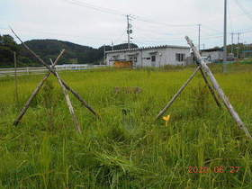 陸前高田ひろば20200627060.jpg