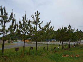 陸前高田ひろば20200704037.jpg