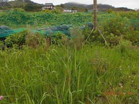 陸前高田ひろば20200711005.jpg