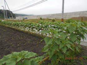 陸前高田ひろば20200711042.jpg