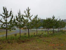 陸前高田ひろば20200718034.jpg
