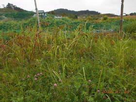 陸前高田ひろば20200724005.jpg