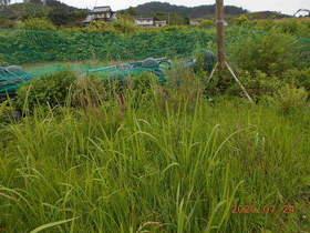 陸前高田ひろば20200724006.jpg