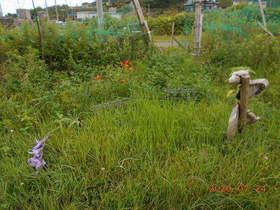 陸前高田ひろば20200724007.jpg