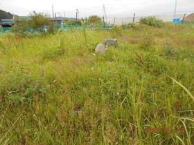 陸前高田ひろば20200724019.jpg