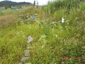 陸前高田ひろば20200724026.jpg