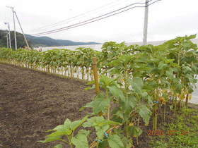 陸前高田ひろば20200724031.jpg