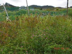 陸前高田ひろば20200801004.jpg