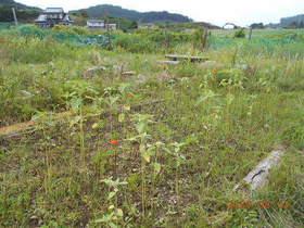 陸前高田ひろば20200801022.jpg