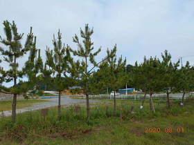 陸前高田ひろば20200801034.jpg