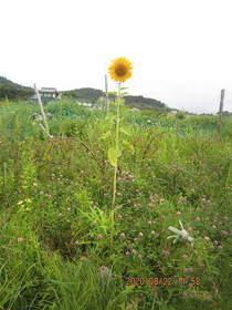 陸前高田ひろば20200822003.jpg