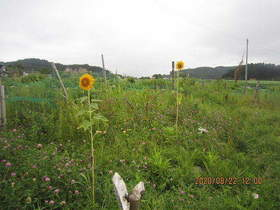 陸前高田ひろば20200822009.jpg