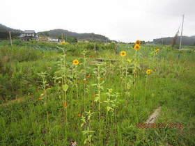 陸前高田ひろば20200822024.jpg