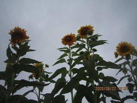 陸前高田ひろば20200822038.jpg