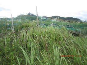 陸前高田ひろば20200926002.jpg