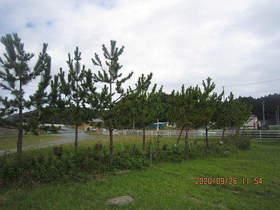 陸前高田ひろば20200926028.jpg