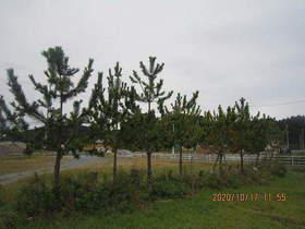 陸前高田ひろば20201017025.jpg