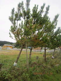 陸前高田ひろば20201017026.jpg