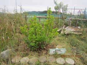 陸前高田ひろば20201017033.jpg